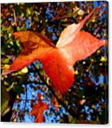 The Flavor Of Fall Canvas Print