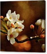 The Fleeting Sweetness Of Spring Canvas Print