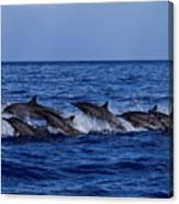 The Flight Of The Spinner Dolphin Canvas Print