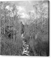 The Florida Trail Canvas Print