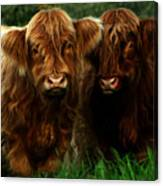 The Fluffy Cows Canvas Print