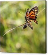 The Flutterby Canvas Print