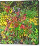 The Foliage That Seems To Be Almost Sentient  Canvas Print
