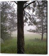The Forest In The Mist Canvas Print