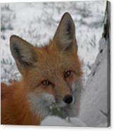 The Fox 4 Canvas Print