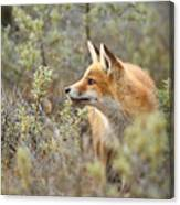 The Fox And Its Prey Canvas Print