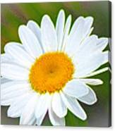 The Friendliest Flower Canvas Print