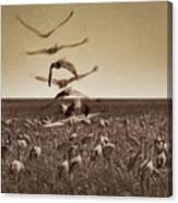 The Gathering - Sandhill Cranes Canvas Print