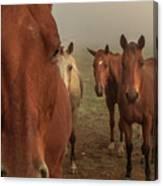 The Gauntlet - Horses Canvas Print