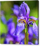 The Gentleness Of Spring 4 - Paint Canvas Print
