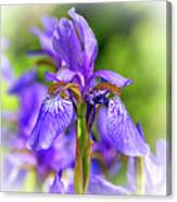 The Gentleness Of Spring 5 - Vignette Canvas Print
