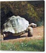 The Giant Tortoise Is Walking Canvas Print