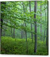 The Gloaming Canvas Print