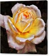The Glowing Rose Canvas Print