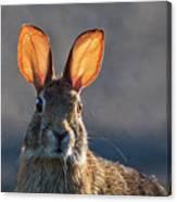Golden Ears Bunny Canvas Print