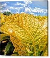 The Golden Leaf Canvas Print