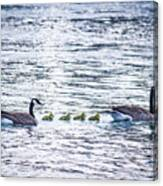 The Goose Family Canvas Print