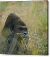 The Gorilla 5 Canvas Print