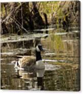 The Graceful Goose Canvas Print