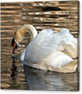 The Graceful Swan  Canvas Print