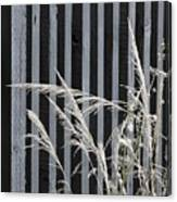 The Grass And Fence Canvas Print