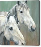 The Grays - Horses Canvas Print
