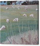 The Grazing Sheep Canvas Print