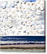 The Great Flock Canvas Print