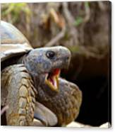 The Great Gopher Tortoise Canvas Print