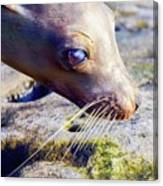 The Great Seal Canvas Print