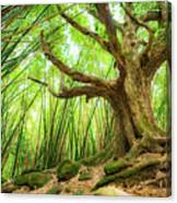 The Great Tree Canvas Print
