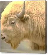 The Great White Buffalo Canvas Print