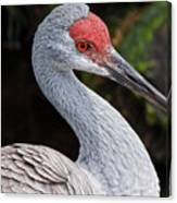 The Greater Sandhill Crane Canvas Print
