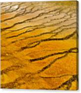 The Groove Canvas Print