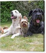 The Group Of Dogs Canvas Print