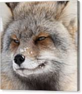 The Handsome Cross Fox Male Canvas Print