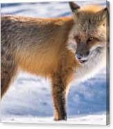 The Handsome Hunter Canvas Print