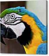 The Happy Macaw Canvas Print