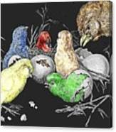 The Hatching Of Chicks. Canvas Print