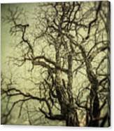 The Haunted Tree Canvas Print