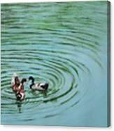 The Herd Series - Duck Meet Canvas Print