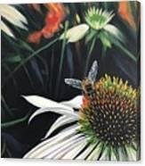 The Honeythief Canvas Print