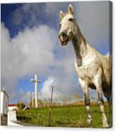 The Horse And The Chapel Canvas Print