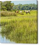 The Horses Of Cumberland Island Canvas Print