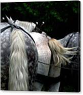 The Horses Of Mackinac Island Michigan 04 Canvas Print