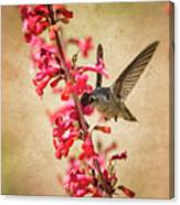 The Hummingbird And The Spring Flowers  Canvas Print