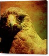 The Hunter . Portrait Of A Hawk . Texture . 40d7877 Canvas Print