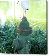 The Hydrant Bird Canvas Print