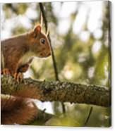 The Hypnotized Squirrel Canvas Print