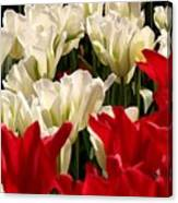 The Image Of A Tulip Canvas Print